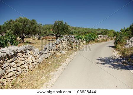 Asphalt Road Along The Olive Grove, Croatia Dalmatia