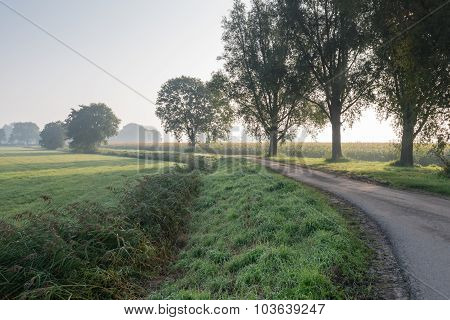 Trees Beside A Curved Country Road
