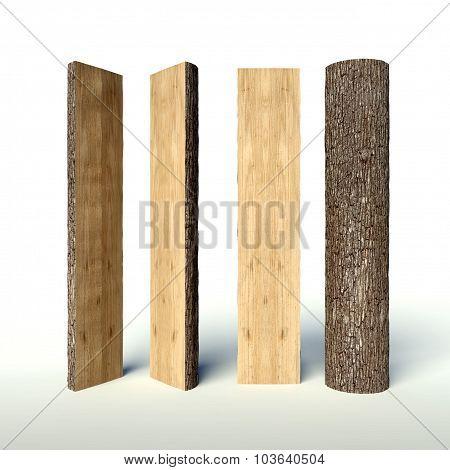 Set Of Cut Tree Trunk, Cross Section
