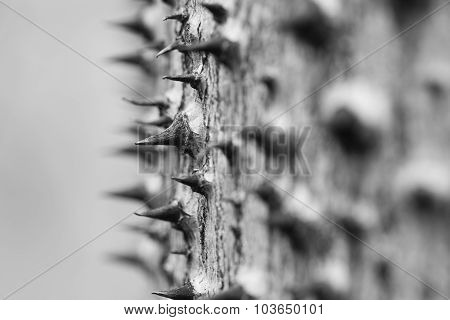 Abstract Of The Thorny Trunk