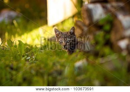 Kitten alert.