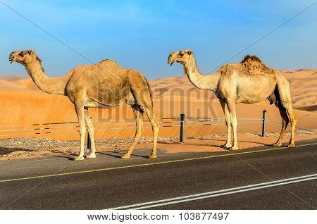A Road Through A Desert Dunes
