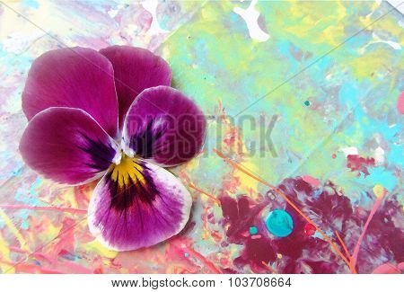 Purple Heartsease On A Picturesque  Background With Spray Paint.