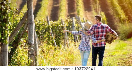 Couple walking in between rows of vines, back view