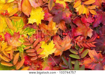 Background of fallen autumn leaves.