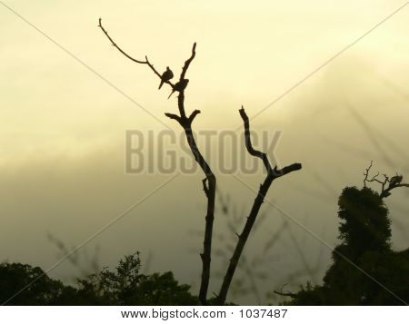 Two Birds On A Dead Tree Leaf