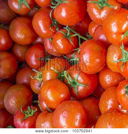 Fresh Wet Red Tomato