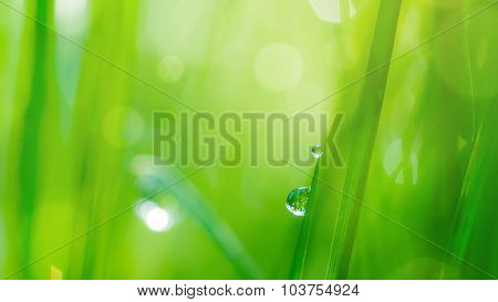 drop on grass and green background with natural bokeh, soft focus. Header for website