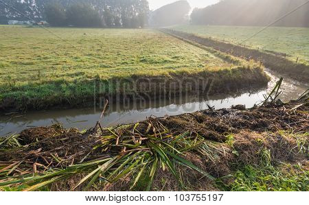 Plant Residues On The Bank Of The Ditch
