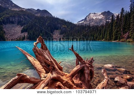 Uprooted tree, turquoise glacial lake, pine trees, and snow-capped mountains