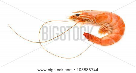 Shrimp On A White Background