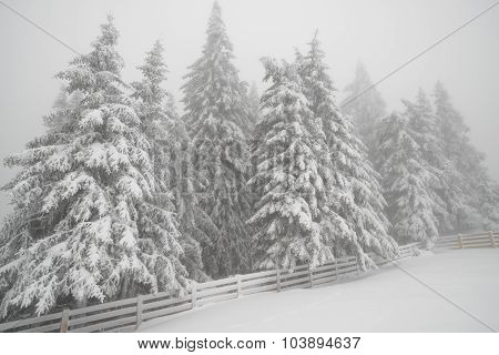 Snowfall In Mountain Winter Forest