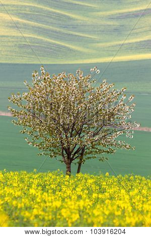 Blooming Tree over yellow and green fields - abstract spring landscape, vertical