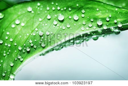 Beautiful green leaf covered with dew drops over blue background, abstract natural border with copy space, purity and spa concept