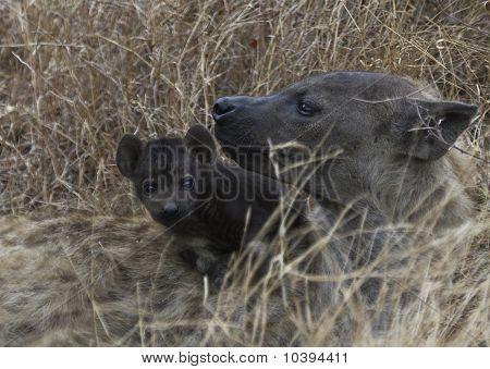 Hyena & pup in Kruger National Park
