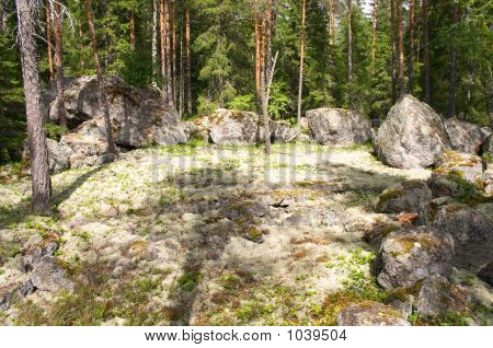 Forest Stony Lawn