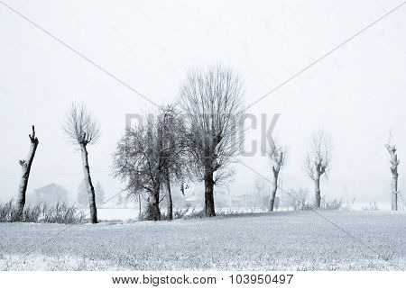 Snowy Countryside