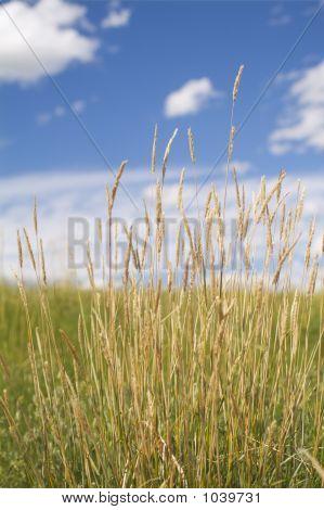 Nosehillgrass8418