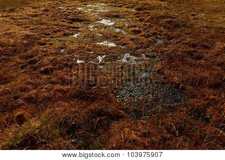 Forest swamp fall colors cover of moss and marsh grass poster