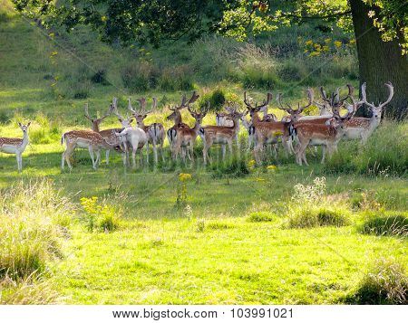 This is a photograph taken of deer in the Berkeley Deer Park, Gloucestershire ** Note: Soft Focus at 100%, best at smaller sizes