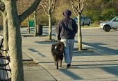 woman walking black dog in the park poster