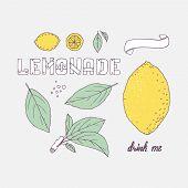 Set of hand drawn elements for lemonade or soda drink package design. Doodle lemon leaves icons logo template and handlettering wooden sign. Vector illustration poster