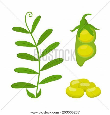 Legume plant, soybeans, lentil bean. Made in cartoon flat style. Vector illustration