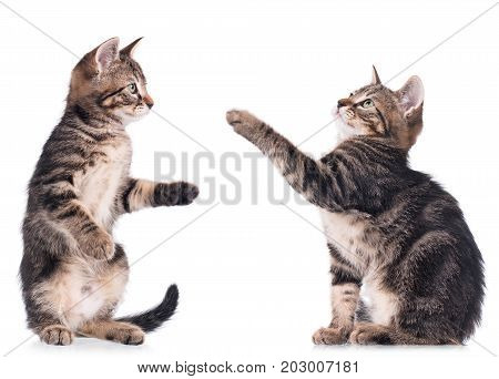 Set of serious cute kittens isolated on white background