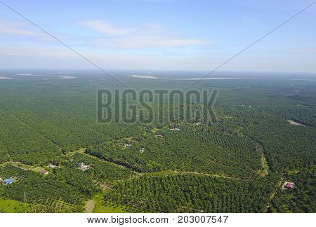 Arial View Of Palm Plantation With Dramatic Blue Sky At Background.
