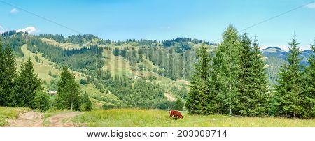 Panorama of Carpathian mountains with trees and pasture with grazing cow in the foreground and buildings of a mountain village on a opposite hillside