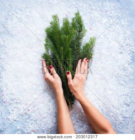 Card With Female Hands Holding Christmas Fir
