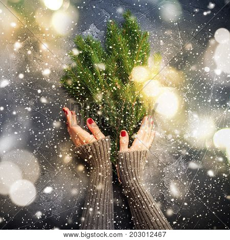 Christmas Card Hands Sweater Holding Fir Branches
