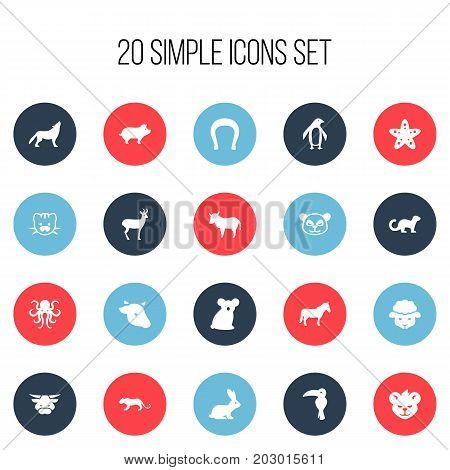 Set Of 20 Editable Zoo Icons. Includes Symbols Such As Diver, Tentacle, Australian Bear And More