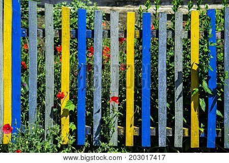 Residential paint picket fence with poppy flower