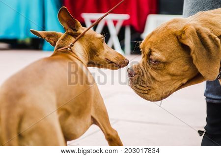acquaintance of two dogs for a walk in the park in autumn