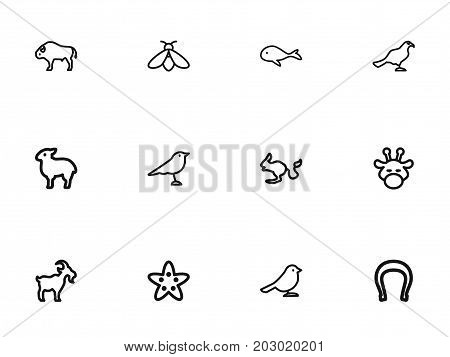 Set Of 12 Editable Animal Outline Icons. Includes Symbols Such As Rodent Desert, Bison, Crow And More