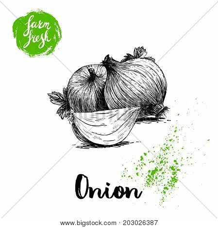 Hand drawn sketch onions with parsley leafs. Whole and onion segment. Farm fresh vegetables poster.