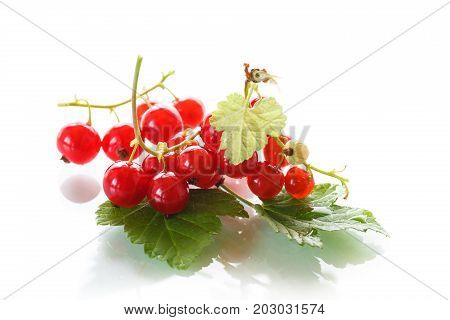 Fresh red currant on a white background
