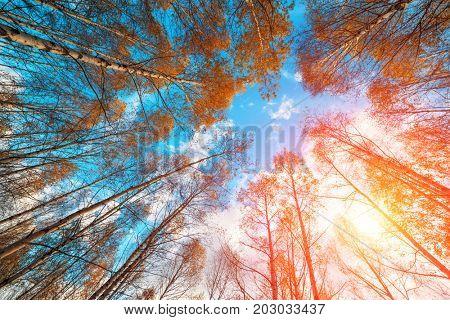 Majestic birch tree with a cloudy sky