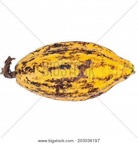 Cacao Fruit, Raw Cacao Beans, Cocoa Pod Isolated On White Background
