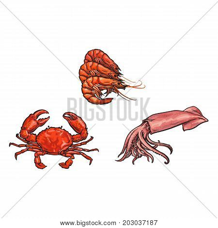 vector sketch cartoon sea crayfish lobster, crab and squid. Isolated illustration on a white background. Sea delicacy food concept