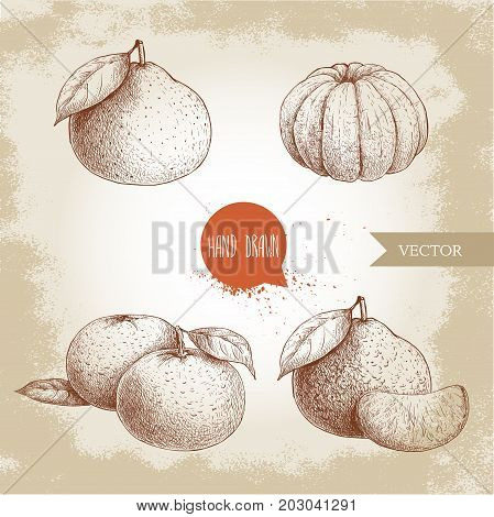 Hand made sketch set od mandarins whole and peeled. Vintage style illustration of tangerine with leafs an slices. Eco food vector artwork.