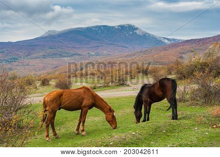 Two Tatar horses grazing in autumnal mountains in Crimean peninsula