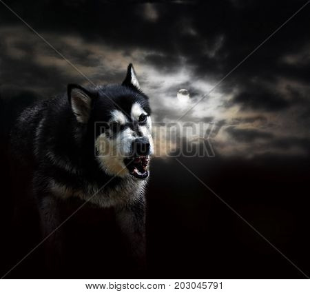 aggressive wolf rocks against the full moon