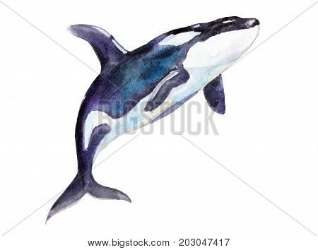 Watercolor orca hand-drawn illustration isolated on white background.