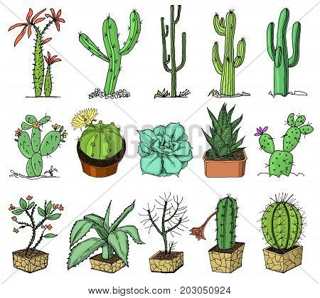 home cactus plants with prickles and nature elements in pots and with flowers. exotic or tropical. collection of various succulents. engraved in ink hand drawn in old sketch and vintage style