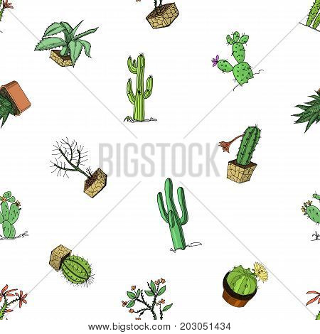 home cactus plants with prickles and nature elements in pots and flowers. exotic or tropical. various succulents, seamless pattern. engraved in ink hand drawn in old sketch and vintage style