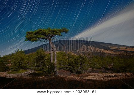 moonlight on Etna Volcano and big pine against star trails, Sicily