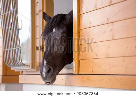 Horse's Head Sticking Out Of The Pen