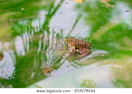 Many Frog On The Water In The Cement Block , Bull Frog On A Log Near Wakefield